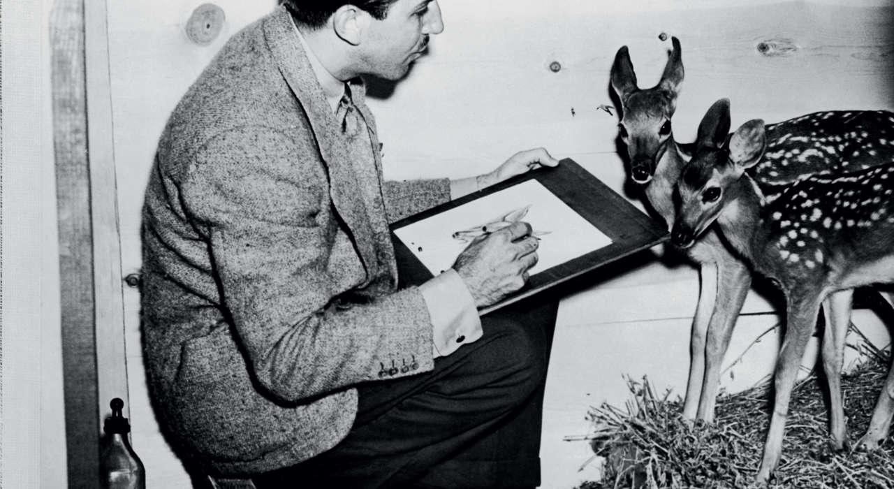 Walt Disney Dessinant Un Faon Bambi 1942 Disney